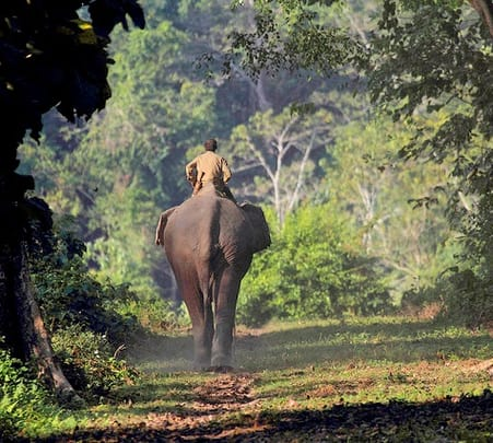 Elephant and Jeep Safari at Kaziranga National Park