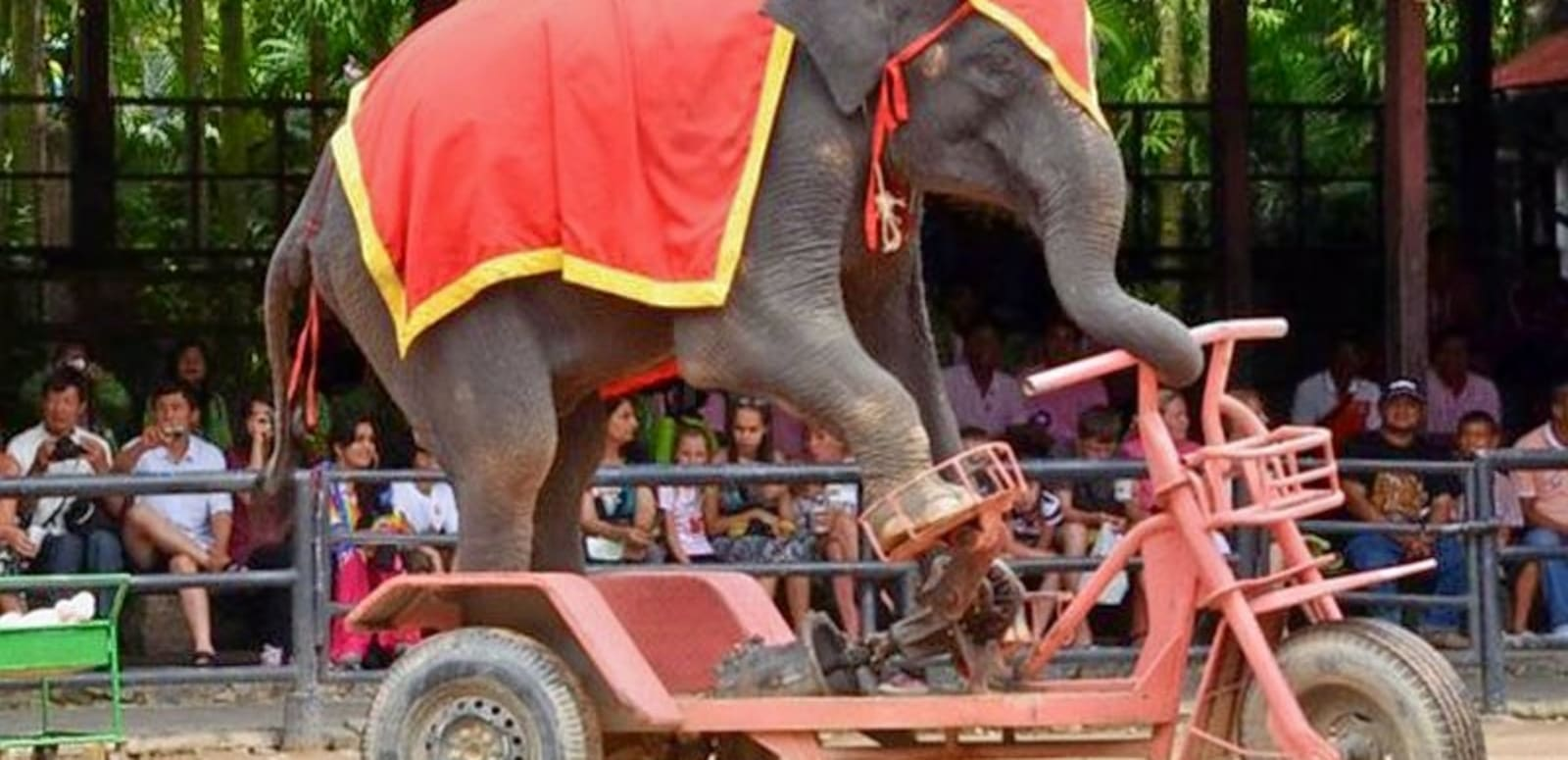 fb0e9de4502 Elephant Training Show And Village Tour In Pattya