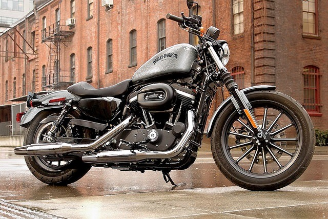 Harley_davidson_883_iron_5.jpg