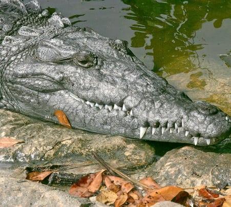 Backwater Kayaking  and Crocodile Challenge in Goa