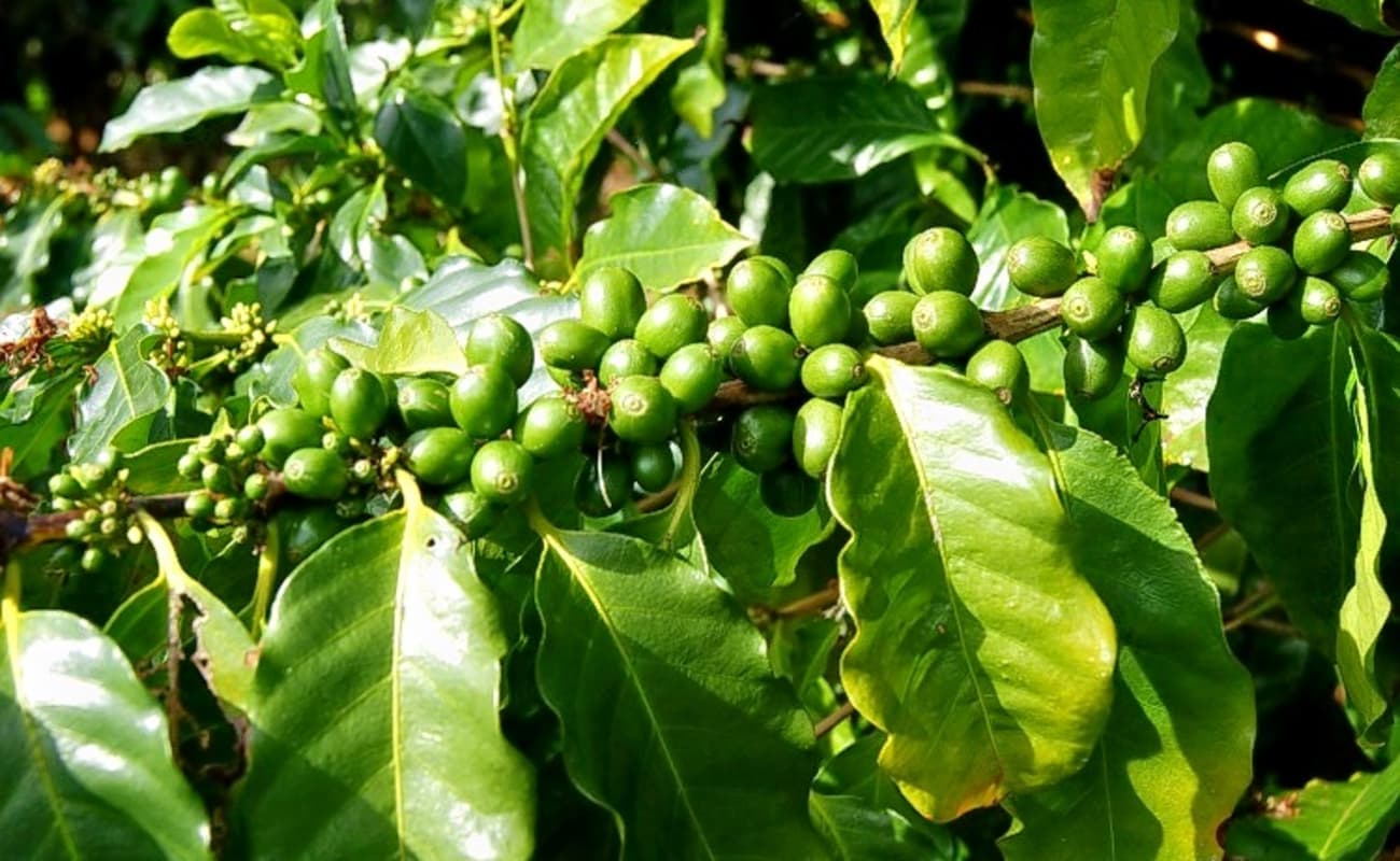 Coorg coffee plantation tour thrillophilia for Country plans com