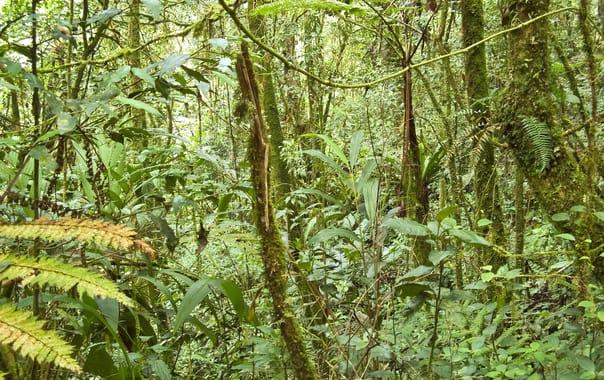 Forest_on_gunung_batu_brinchang__malaysia.jpg