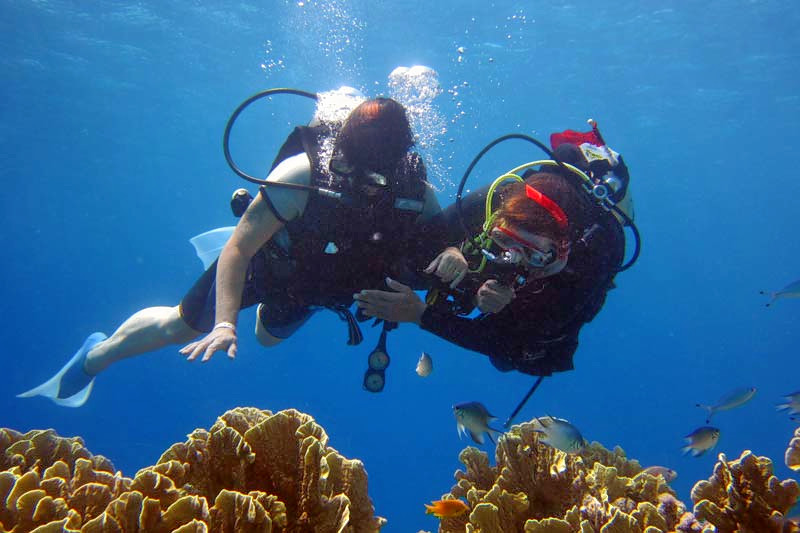 1488289030_diving_(2).jpg