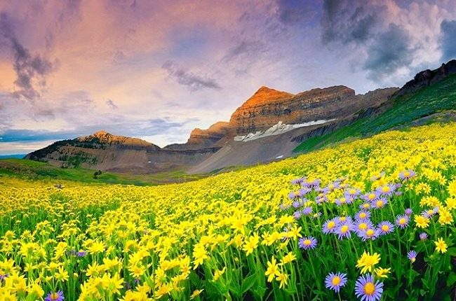 Valley_of_flowers_8.jpg