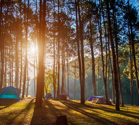 Camping in Tea Estate Of Wayanad With Barbecue - 30% Off