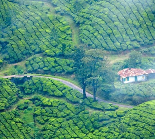 Cochin, Munnar and Thekkady Tour