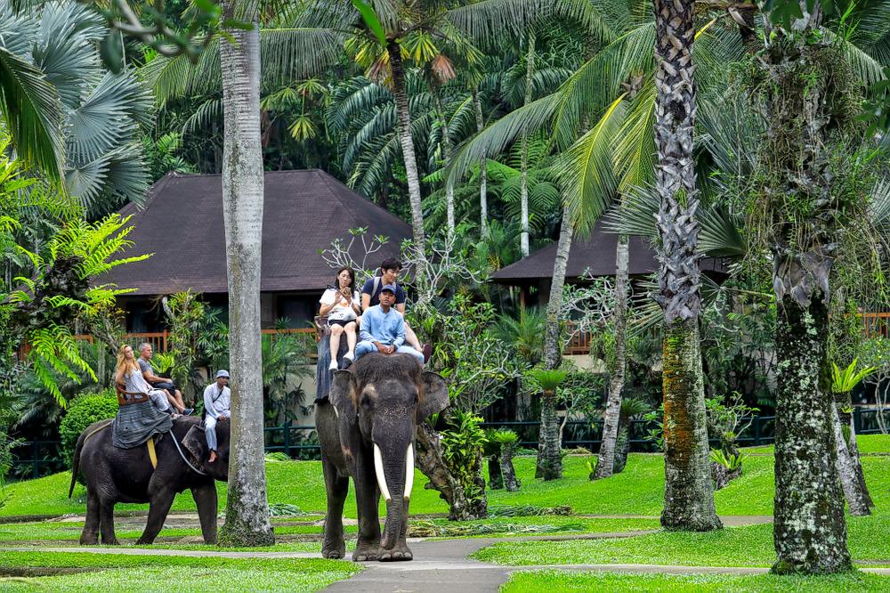 1593413421_bali_safari.jpg