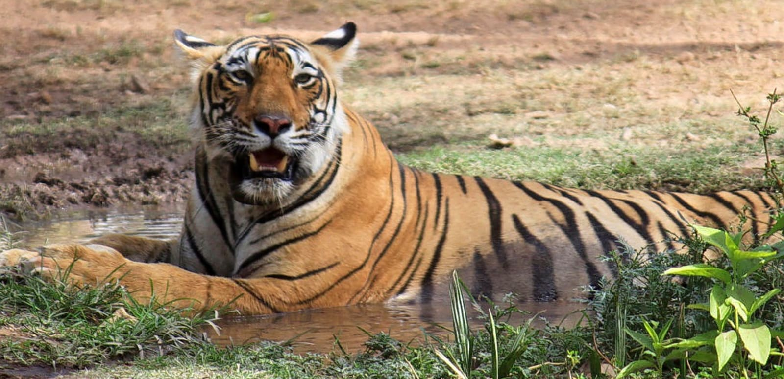 Image result for ranthambore tour