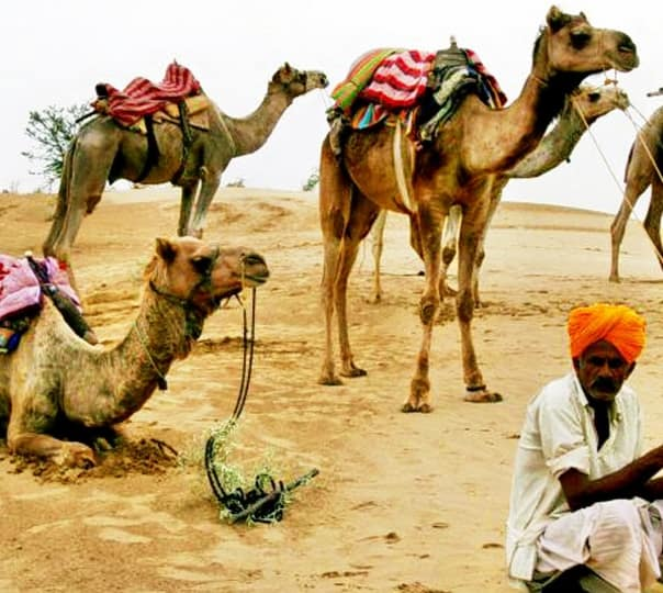 Camel Safari with Mirvana Resort