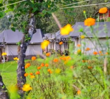 Camping in Dharamshala at 5000 Ft - Flat 14% Off