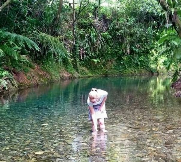 Daintree Dreaming Day Tour in Cairns