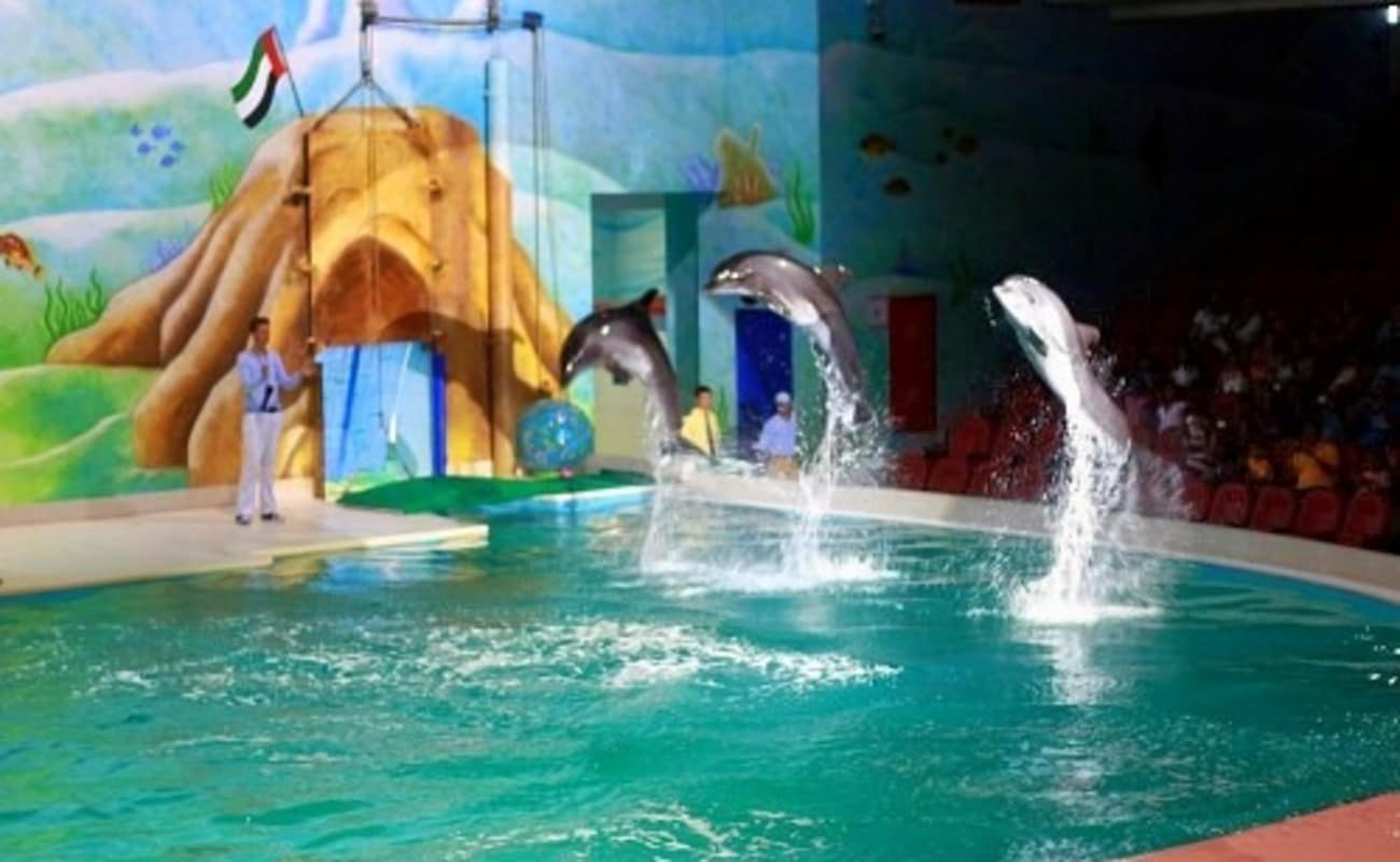 Swimming With Dolphins In Dubai Dolphinarium Thrillophilia