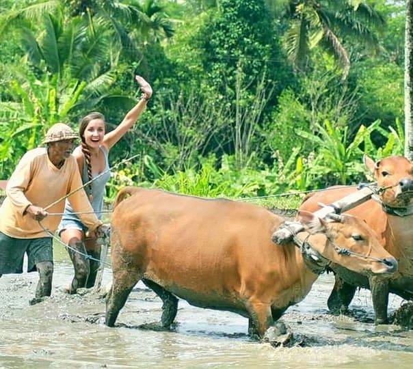 Bali Rice Field Trekking and Ploughing in Bali