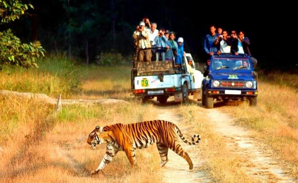 Camping With Jungle Jeep Safari In Periyar
