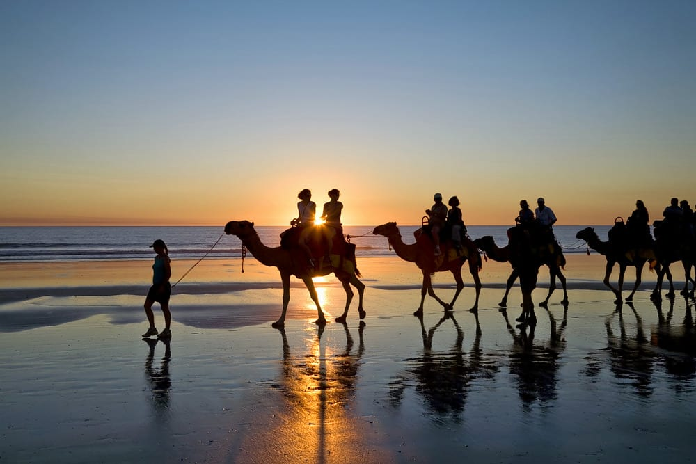Enjoy Camel Ride on the Beach