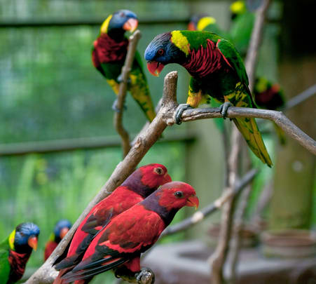 Kl Bird Park Tour with One Way Transfer