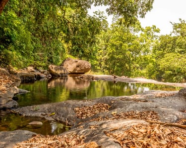 Walk Through the Natural Trail of Wayanad, Kerala Flat 27% Off