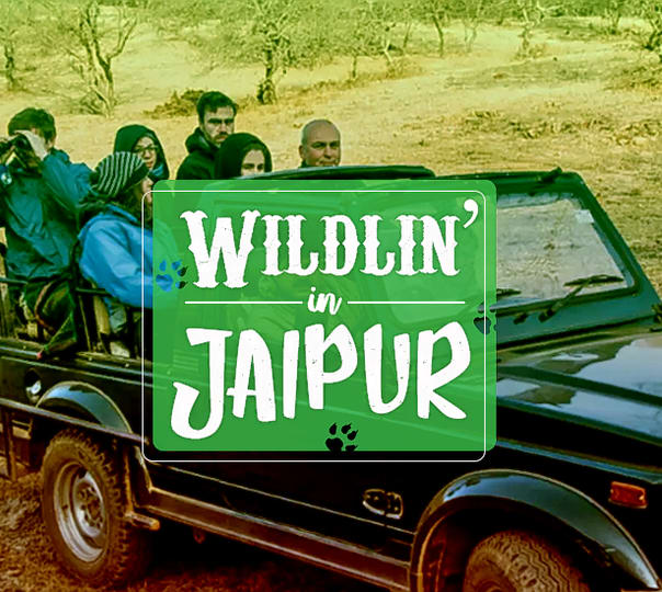Wildlife Safari in Jaipur