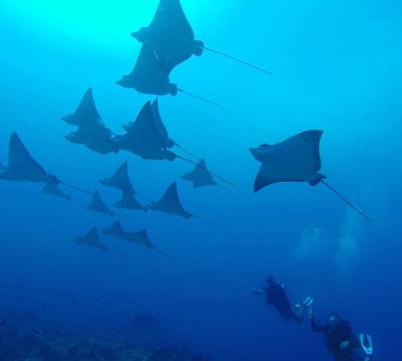 3 Nights Scuba Diving Tour in Maldives
