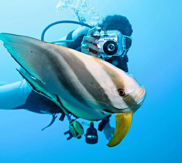 6 Days Dive Safari Aboard the Mv Marco Polo