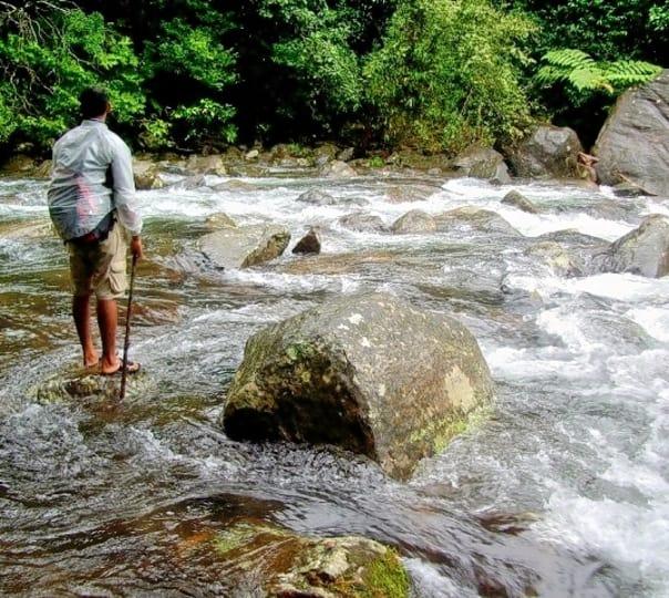 Trekking Through Kalladi Forest, Wayanad