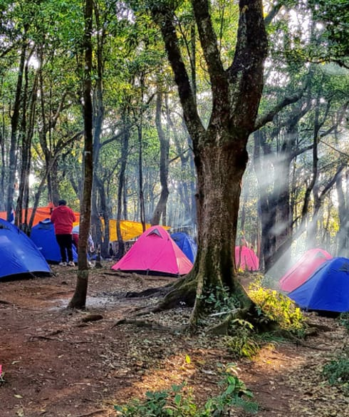 1539234166_jungle_camping.jpg