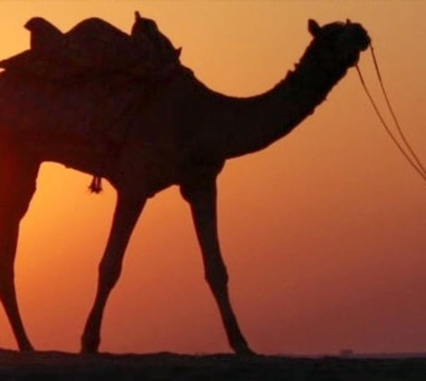 Camel Safari and Camping in Karnu