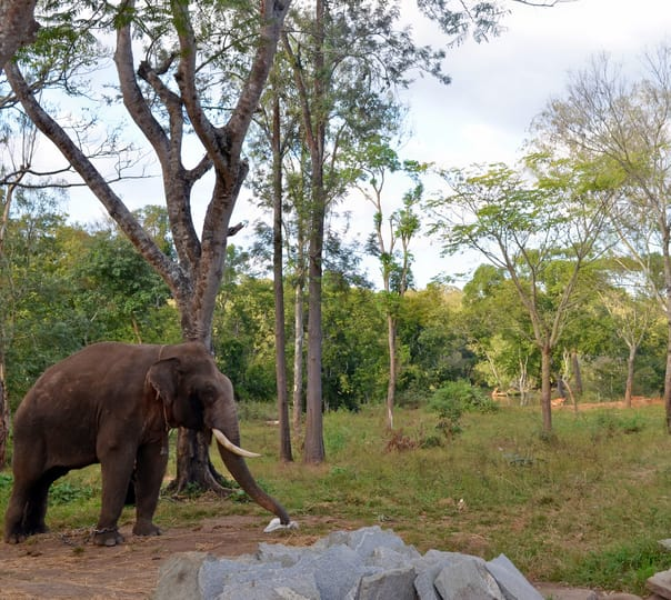 Stay At Dubare Elephant Camp In Coorg