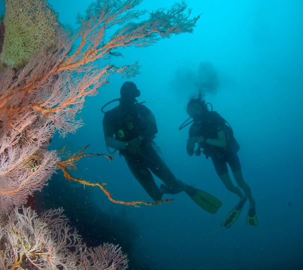 PADI OPEN WATER COURSE PACKAGES (4D-3N beginner course)