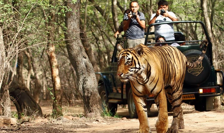 Go For A Jeep Safari Through Periyar Jungle