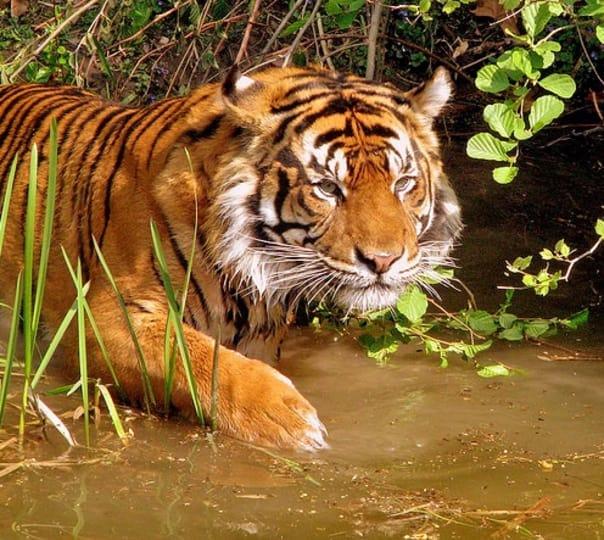 Madhya Pradesh, Tiger and Temple Tour