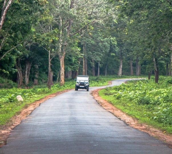 Offroad Jeep Safari to Mullayanagiri Coffee Estates