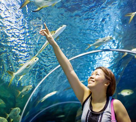 Underwater World Pattaya Admission Ticket - Flat 20% off