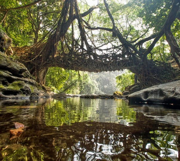 Trek to the Living Root Bridges in Meghalaya