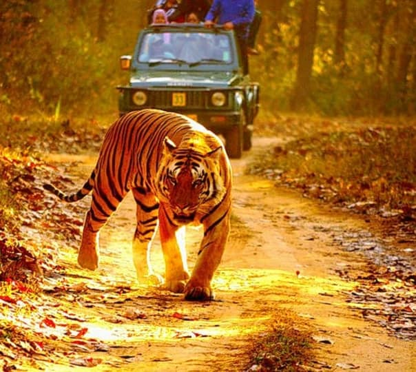 Wildlife Exploration at  Kanha National Park