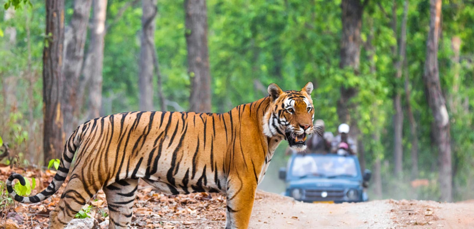 Top 25 Wildlife Sanctuaries in India