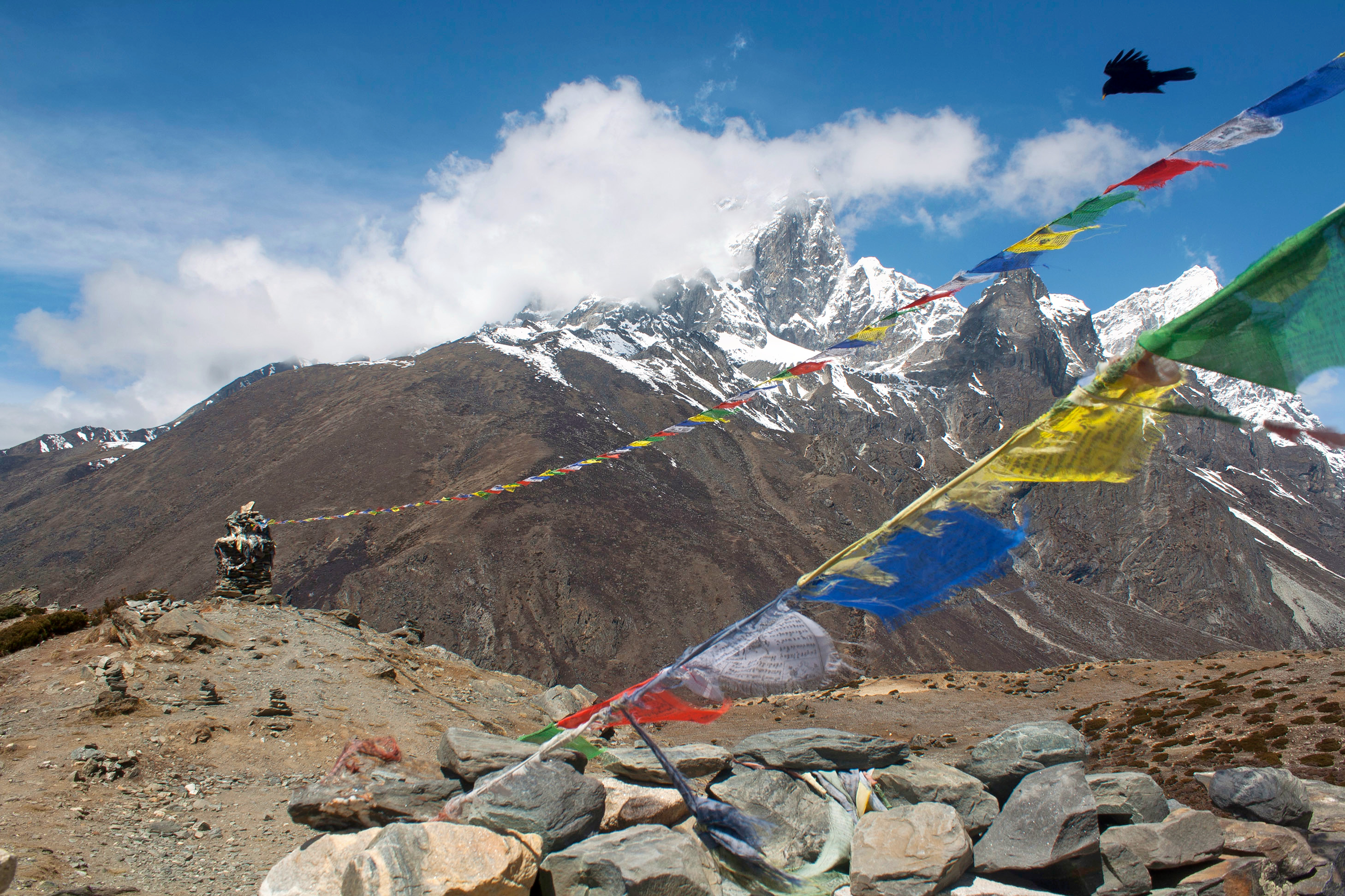 1486972156_bird_and_prayer_flags_in_front_of_mt_ama_dablam__sagarmatha_national_park__nepal.jpg