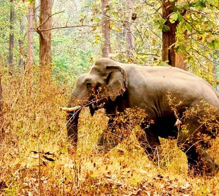 Wildlife Kerala Tour