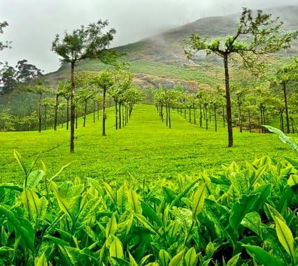 Paradise Kerala