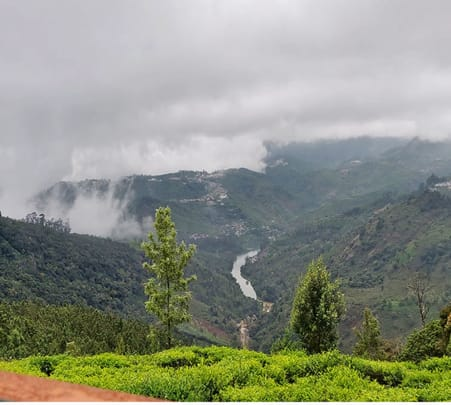 Jungle Camping and Adventures in Ooty