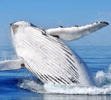 North Stradbroke Island and Whale Watching Tour in Brisbane