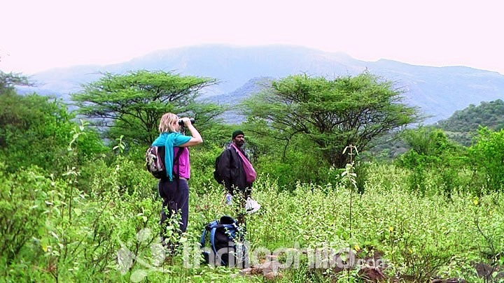 Walks-through-dry-forest-chinnar_kerala.jpg