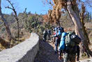 1462358631_dayara_bugyal_trekking_12.jpg