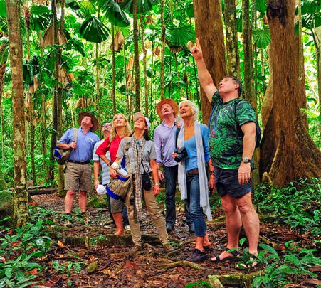Wildlife Tour in Cairn's Rainforest