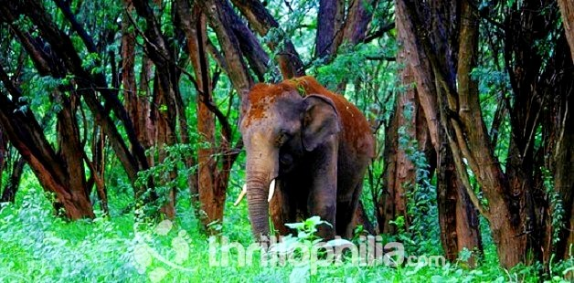 Elephant-at-chinnar_kerala.jpg