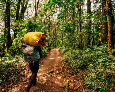 Sinharaja Forest Reserve Hike from Mirissa - Flat 19% off