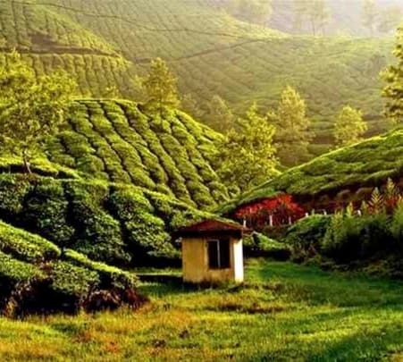 """Make Your Tea"" Experience, Munnar"