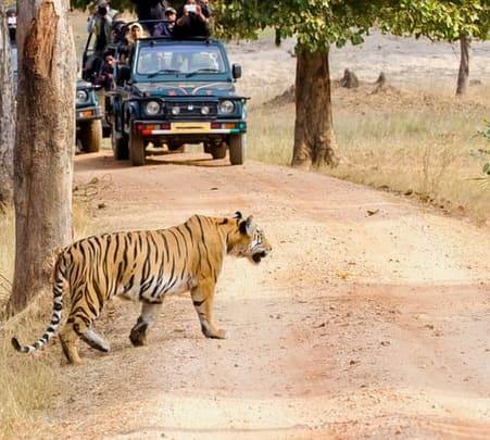 Camping with Safari & Horse Riding in Bandhavgarh