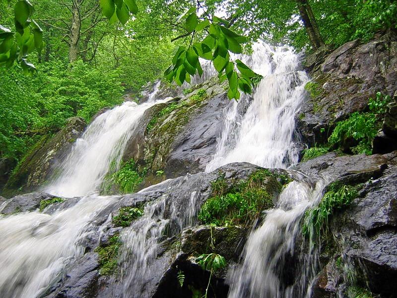 Rock_water_agua_roca_flor_bach.jpg