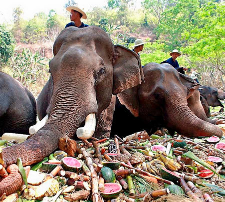 Elephant Ride and Trekking in Pattaya